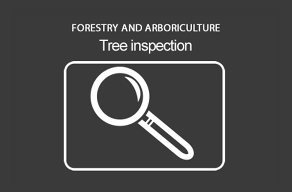 Basic Tree Inspection